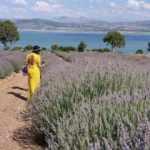 Burdur'un 'mor bahçeleri' bayramda binlerce kişi ağırladı