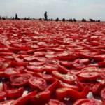Diyarbakır'ın kurutulmuş domatesleri dünyaya ihraç ediliyor