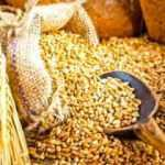 Yerli ve milli tohumlar Kanada'dan Güney Kore'ye kadar ulaştı