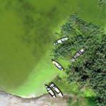 Bursa'da alg patlaması! Göl yemyeşil oldu