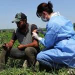 Karacabey Ovası'nda işçilere Kovid-19 aşıları tarlada yapıldı