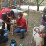 Yangından etkilenen keçilere yardım UMKE ekiplerinden gitti