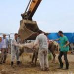Hopa'da TIR parkında ölüme terk edilen atlar karantinada