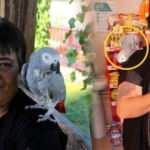 13 yıl önce kredi çekerek aldığı papağanını bir an olsun yanından ayırmıyor!