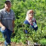 Bahçesine öylesine diktiği frenk üzümü bir ilçenin ikinci gelir kapısı olacak