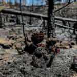 Bakan Pakdemirli: Yanan ormanlar 3-5 yılda yeşile dönecek