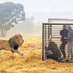 Güney Afrika'da hayvanat bahçesinde roller değişti!