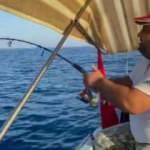 Amatör balıkçının oltasına 30 kiloluk kuzu balığı takıldı