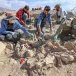 Arkeologları heyecanlandıran görüntü: Köpeği, 4 atı, sığırı ve koyunuyla gömülü bulundu