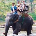 Sri Lanka'da alkollü fil kullanmak yasaklandı