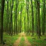 Yem sıkıntısı yaşayan sektör temsilcilerinden çağrı: Ormanlar açılsın