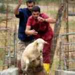 Bursa'da öğrencilerin koyun ve keçilerle ilginç imtihanı!