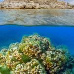 Dünyaca ünlü Salda Gölü'nün eşsiz canlı yaşamı
