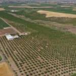 Kıraç araziye kurduğu badem bahçesiyle gelirini 4 kat artırdı