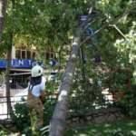 İstanbul'da şiddetli rüzgar ağaçları devirdi