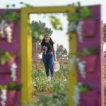 """Safranbolu'nun yeni gözdesi """"aromatik bitki şehri"""""""