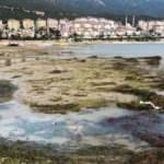 Eğirdir Gölü'nde görülmemiş kirlilik: Bırakın içmeyi, parmağınızı dahi sokmayın!