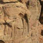 Suudi Arabistan'da kayalara kazınmış deve figürleri 8 bin yıllık çıktı