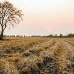TARSİM'den üreticilere kuraklık ödemesi
