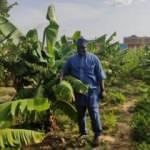 Afrika'da Dikilen Fidanlar Ağaç Oldu
