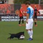 Bosna Hersek'te sahaya köpek girdi!