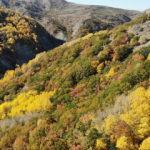 Sonbahar renkleri Erzincan ormanlarına çok yakıştı