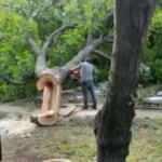 İBB'den ağaç katliamı!