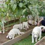 Güney Kore, köpek eti tüketimini yasaklamayı planlıyor