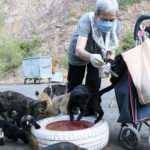 Hayvansever kadın her gün 200 sokak kedisini eliyle besliyor