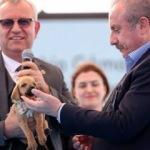 TBMM Başkanı Şentop'a barınak açılışında sokak köpeği armağan edildi