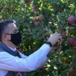 Bakan Pakdemirli Karaman'da bahçeye girip elma topladı