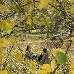 Erzurum sonbahar renkleriyle güzelleşti