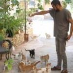 İdlibli hayvansever iç savaş ortamında 35 kediye gözü gibi bakıyor