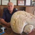 Mersin'de bulundu! 20 kilogram ağırlığında...