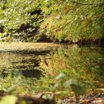 Saklı cennet Yedigöller'de sonbahar