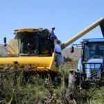 Sivas'ta çiftçi  ayçiçeği üretimini çok sevdi:  3 yılda 13 kat arttı