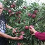 Emekli astsubay hobi bahçesi kurdu! Organik elma yetiştiriyor