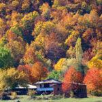 Dipsizgöl sonbahar renklerine büründü! Seyrine doyumsuz manzaralar