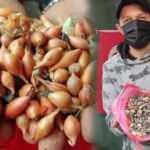 Bursalı pazarcı 10 kilo tohumluk soğan aldı! İçinden çıkan taşları görünce şok oldu
