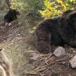 Artvin'de ayıyla özçekim yapan kadın memurun ilgi çeken görüntüleri