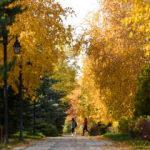 Erzurum Botanik Park'ta sonbahar manzarası mest etti
