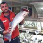 Gelibolulu balıkçı 7 kilogramlık levrek avladı