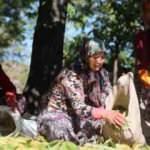 Kestane hasadında çalışan işçiler 600 lira yevmiye alıyor