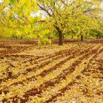 Malatya'da 'kayısılı' sonbahar