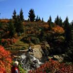 Fotoğraf tutkunları sonbaharda buraya akın ediyor! Sis Dağı'da harika manzaralar