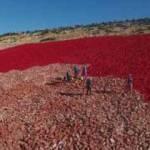Zemine işlenmiş en büyük Türk bayrağı boyanıyor