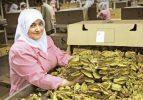 Tütün ihracatında rekor geldi