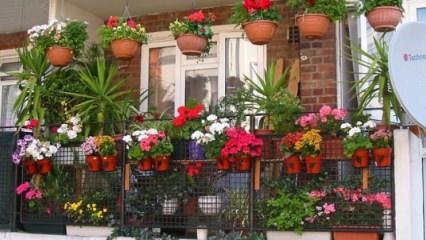 Evde bitki nasıl bakılır?