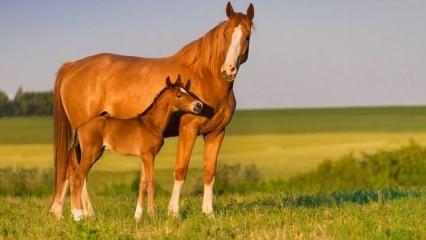 Rüyada at görmek ne anlama gelir? Rüyada at görmenin en anlaşılır tabiri..