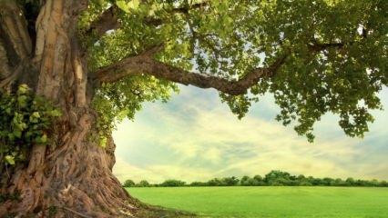 Rüyada ağaç görmek ne anlama gelir? Rüyada ağaç görmenin tabiri...